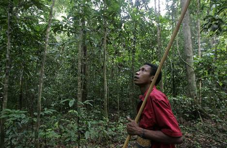Batek-heimoon kuulunut mies kuvattiin metsästämässä Kuala Kohin kansallispuiston sisäänkäynnin lähellä syksyllä 2009.