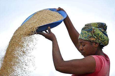 Nainen työskenteli riisimyllyllä Benuen osavaltiossa Nigeriassa lokakuussa 2012.