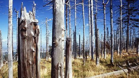 Happosateet tuhosivat laajoja metsäalueita Keski- ja Itä-Euroopassa. Kuva on Puolan Szklarska Porebasta vuodelta 1998.