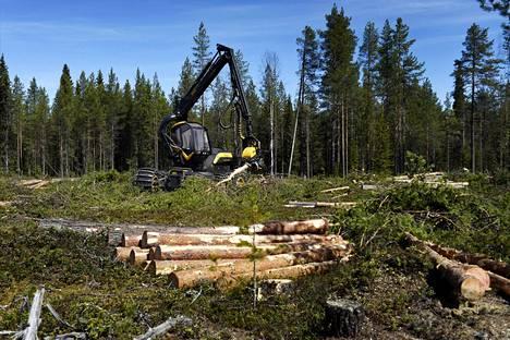 EU-parlamentti äänestää keskiviikkona metsien hiilinieluista. Äänestyksellä on merkitystä sille, millaisia määriä metsiä Suomi voi hakata ilman että joutuisi maksamaan ilmastomaksuja.
