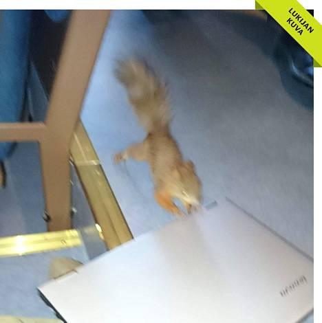 Oravanpoikanen vieraili Espoon kaupunginvaltuuston kokouksessa maanantaina.