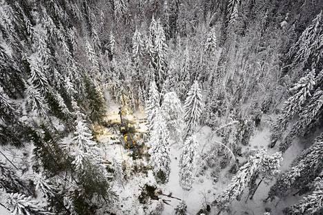 Vieremäläisen metsäkoneyrityksen Ponssen metsäkone harvensi metsää Otanmäessä marraskuussa.