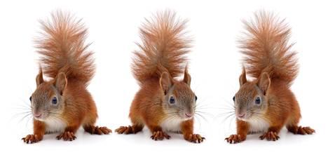 Orava (vas.), Avaro ja Oravo.