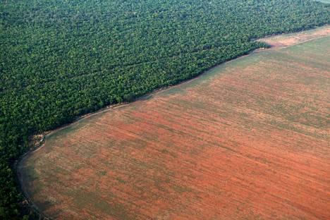 Maatalous on myös johtanut laajaan metsäkatoon. Vuonna 2015 otetussa kuvassa näkyy, kuinka soijapapujen kasvatukselle on vallattu maa-alaa Amazonin sademetsästä Brasiliassa.