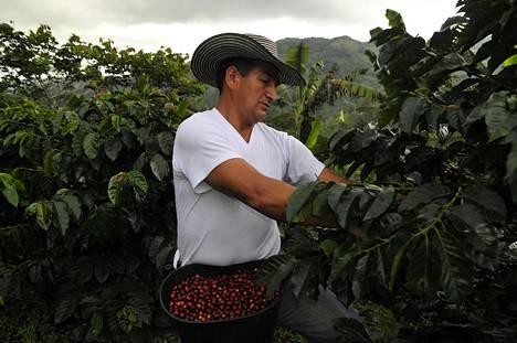 Nespresso tekee paljon vastuullisuustyötä kahvinviljelyalueilla. Reviving origins -hankkeessa elvytetään paikallista kahvintuotantoa.