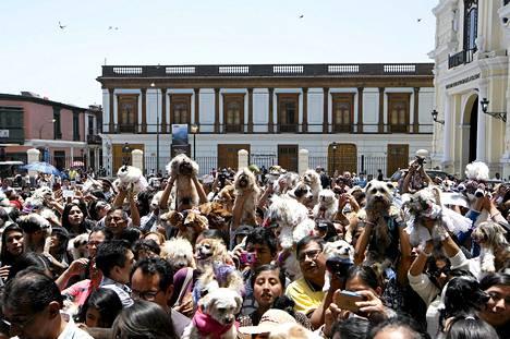 Satoja lemmikkejä siunattiin Pyhän Fransiskuksen juhlassa Limassa Perussa sunnuntaina. Omistajat odottivat lemmikkeineen San Francisco -kirkon ulkopuolella.