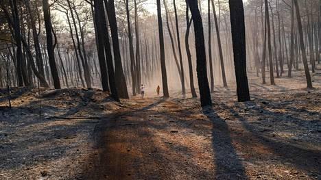 Ihmiset kävelivät palaneessa metsässä lähellä Turkin Marmarista 30. heinäkuuta.