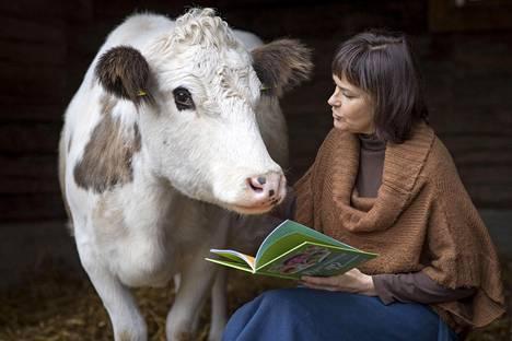 """Kaiturin tilan Heilikki, Onneli ja Anneli ovat uhanalaista lajia, Itä-Suomen karjaa. """"He kantavat kulttuuria mukanaan"""", Reetta Niemelä sanoo. Vieressä Niemelää kuuntelee Anneli."""