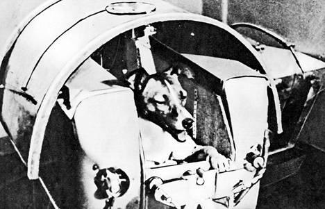 Sekarotuinen Laika-koira kuoli todennäköisesti kapselin kuumenemiseen 5–7 tuntia laukaisun jälkeen.