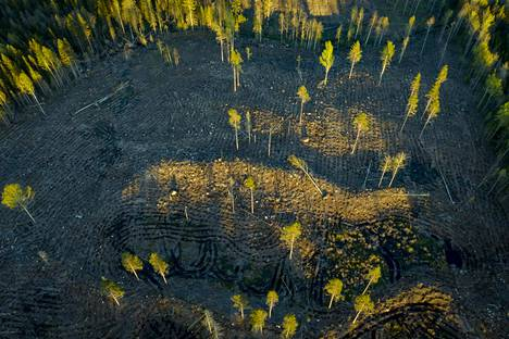 Hakkuiden lisääntyminen pienentää ilmastonmuutosta hillitsevää hiilinielua. Kuvassa hakkuuaukea Sipoossa toukokuussa 2019.