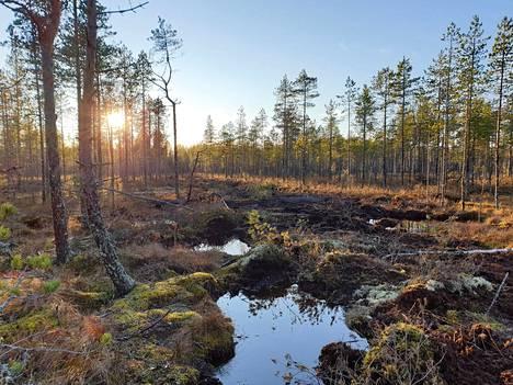 Ennallistamisen yhteydessä täytettyä ojaa Pyhä-Häkin kansallispuistossa.