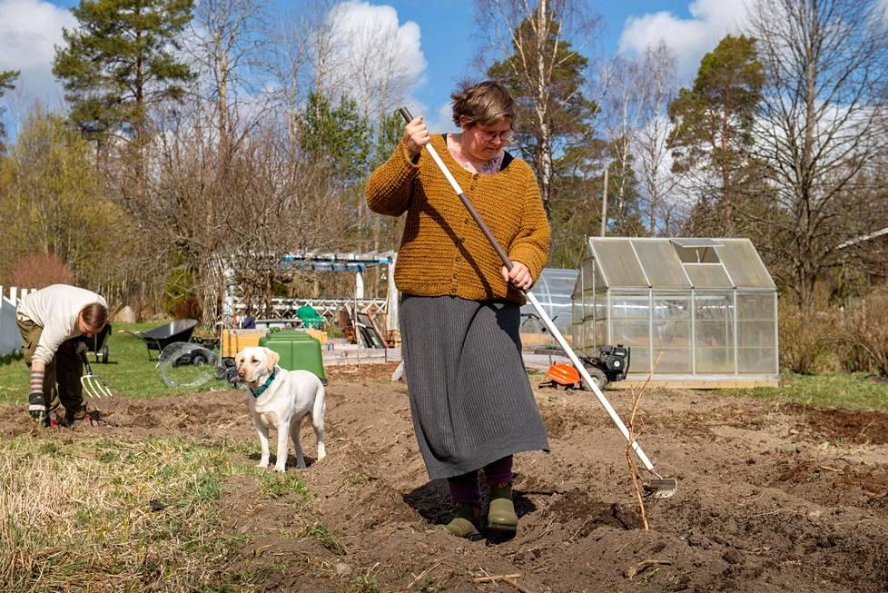 Minna ja Taneli Enqvist valmistelevat perunamaata.
