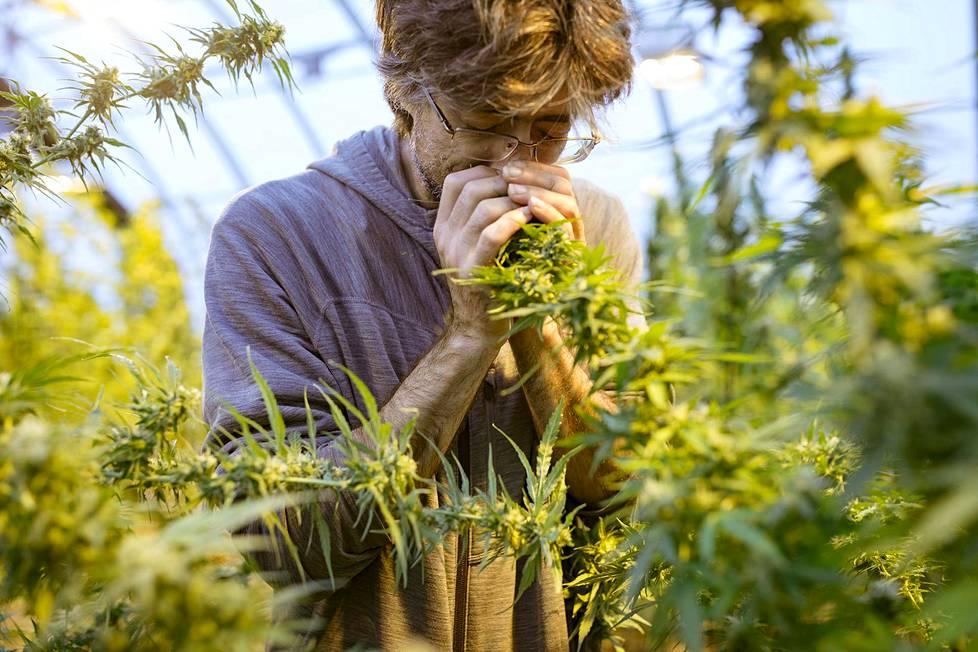 Joel Podersky kasvattaa kannabista omaan käyttöön Robert's Creekissä sijaitsevalla tilalllaan.