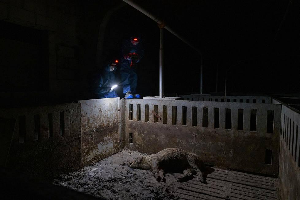 Marraskuussa 2019 aktivistit löysivät farmilta mätäneviä sikojen ruumiita. Kun he palasivat kuukausien päästä, kuolleet eläimet olivat yhä paikoillaan. Ympäristöaiheiset sarjat, 3. palkinto.