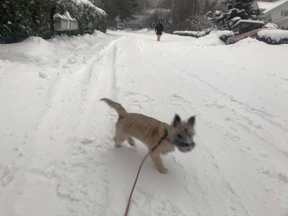 Vartioharjussa sivukadut ja jalkakäytävät odottivat aurausta vielä puolilta päivin. Kahden päivän lumi pakotti jalankulkijat ja koirienulkoiluttajat kulkemaan ajourilla.