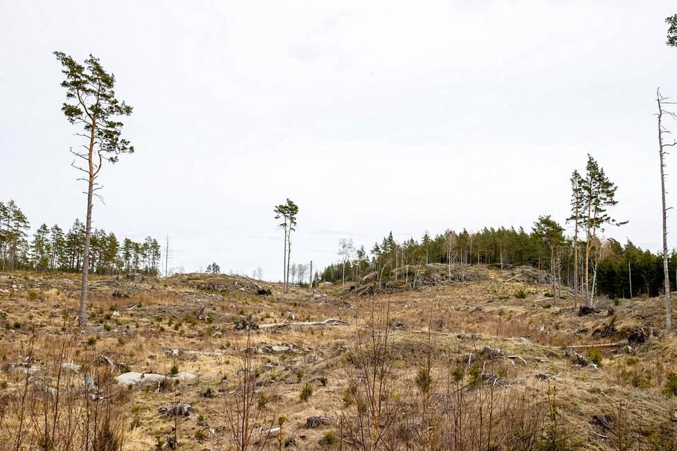 PEFC-sertifioitu metsä Kemiönsaarellä hakattiin viitisen vuotta sitten. Hakkuualue 3. toukokuuta 2021.