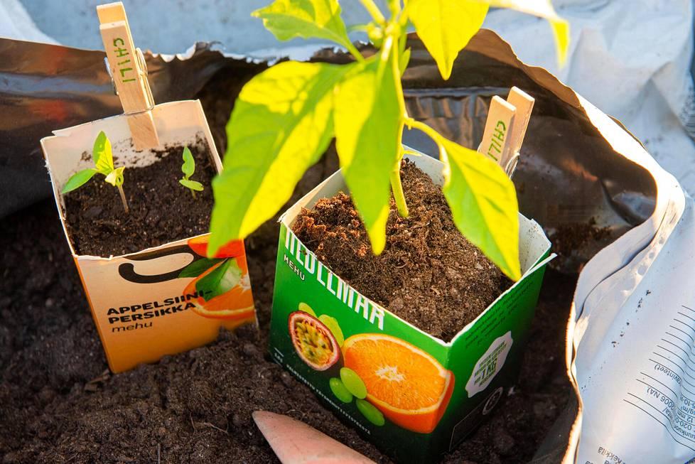 Pakkausjätettä ja muita tarpeettomia esineitä kannattaa hyödyntää taimien kasvatuksessa.