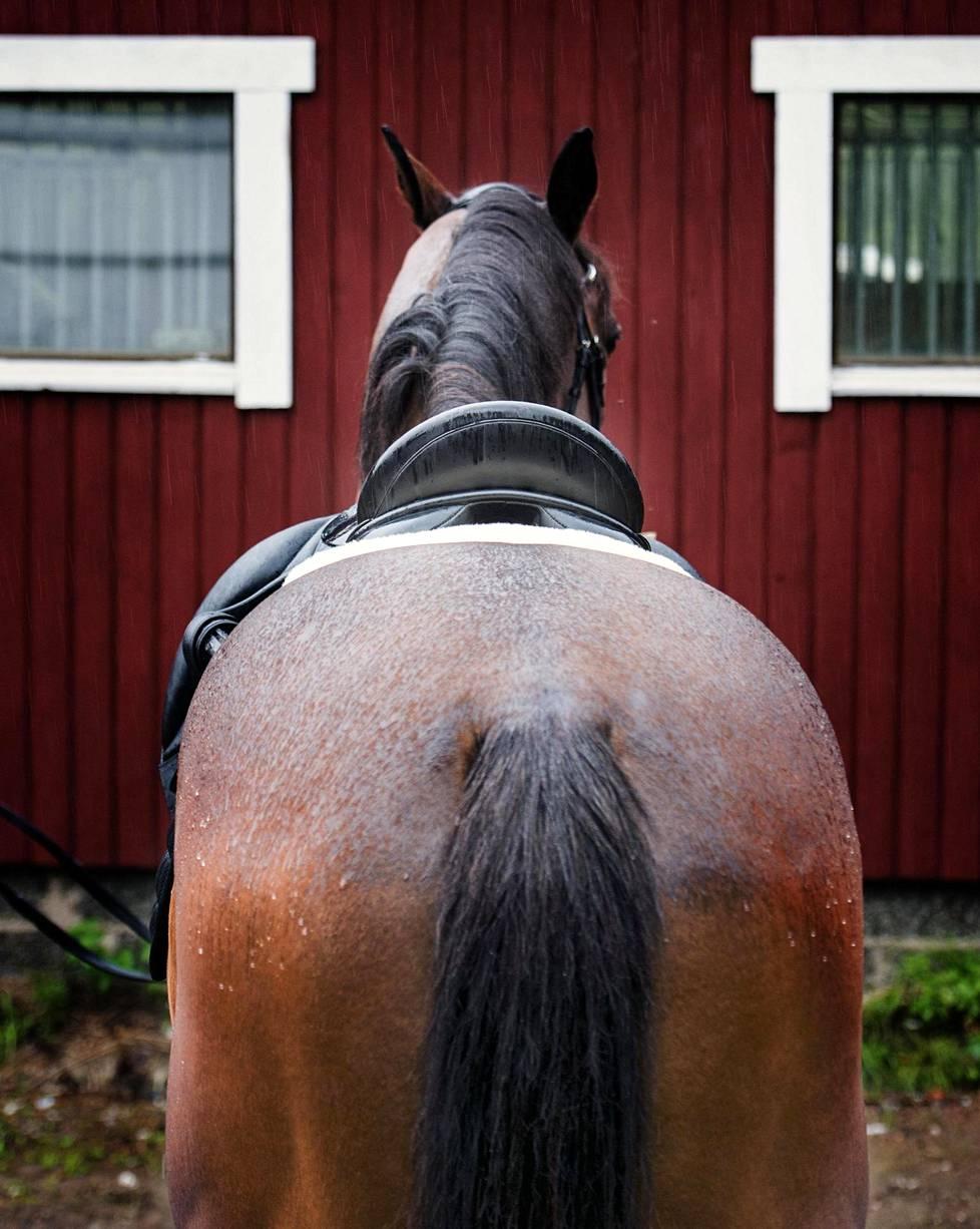 Suomessa osa ratsastuskouluista on ilmoittanut ratsastajien painorajan, osa ei mainitse asiasta mitään.