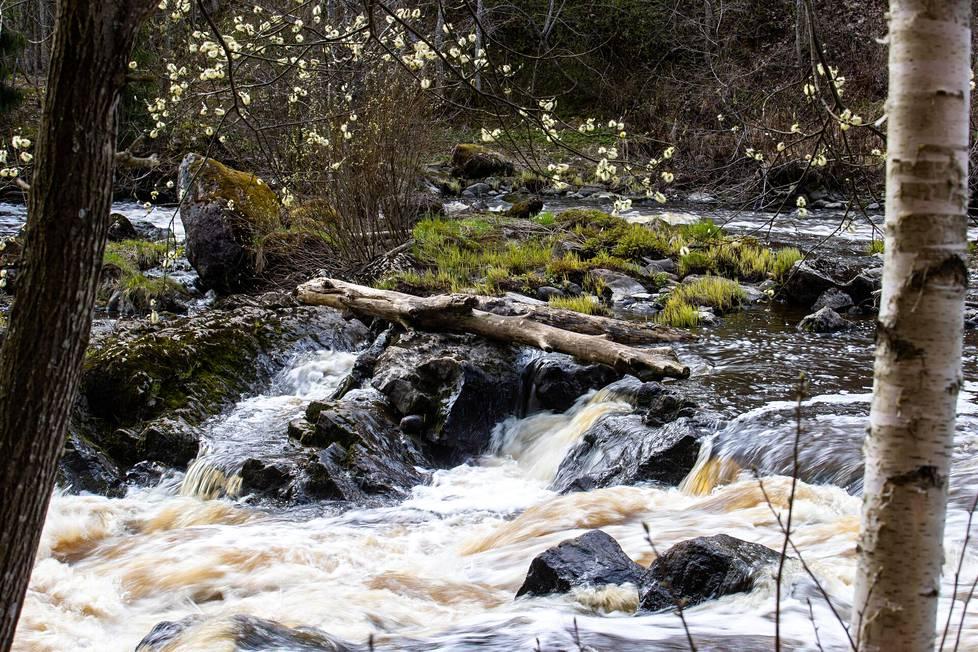 Luonto on toden teolla heräämässä, kun lämpötilan odotetaan Etelä-Suomessa nousevan yli 20 asteeseen alkavalla viikolla.