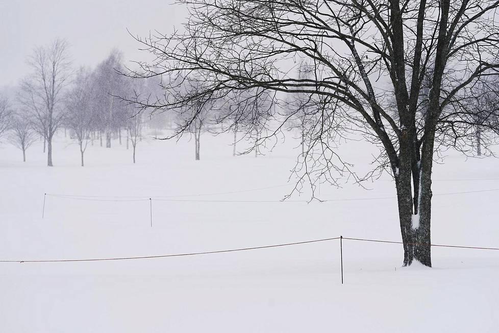Lumisade Siuntion Pickala Golfissa 12. tammikuuta 2021.