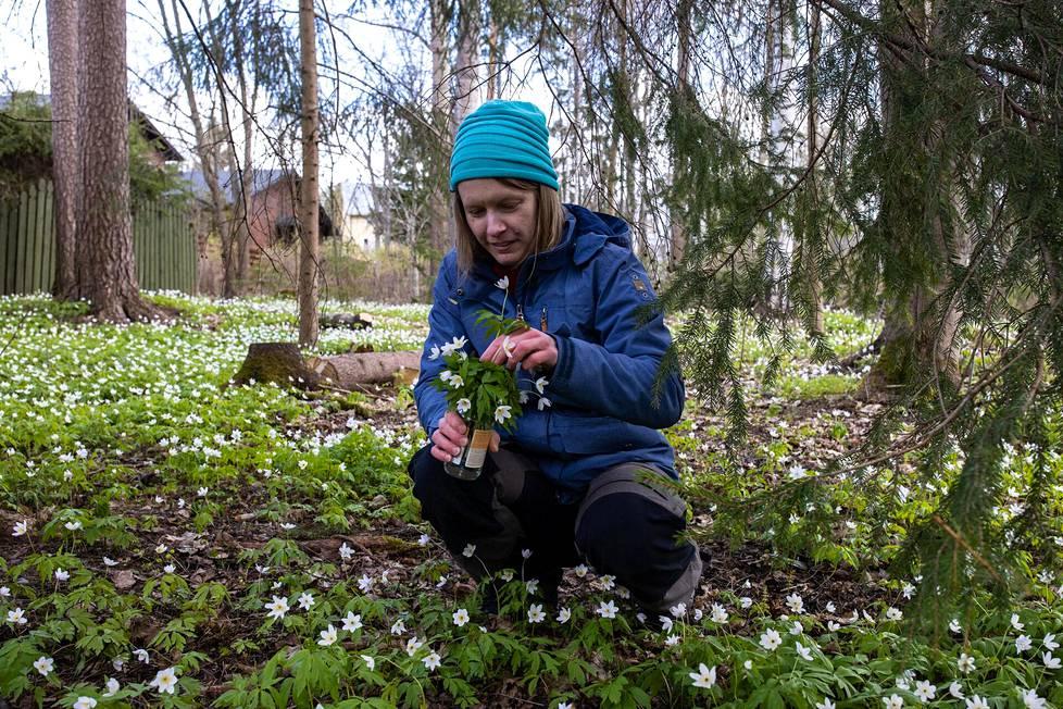 Heidi Ikonen keräsi äitienpäivänä valkovuokkoja Keravalla lähellä isovanhempiensa huvilaa. Se on ollut hänen perinteensä monena vuonna.