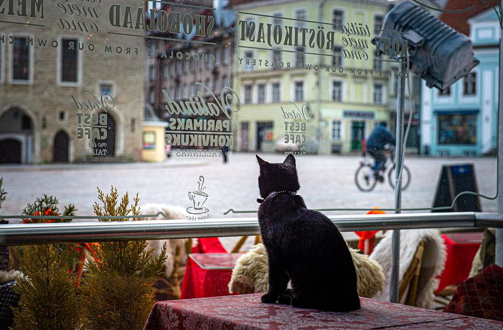 In Café Kehrwieder, the cat observes food broadcasters cycling across the Town Hall.