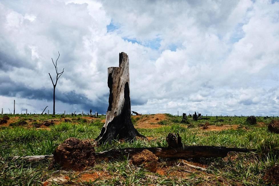 Laidunmaaksi poltettua entistä sademetsää Amazonin alueella Brasiliassa.