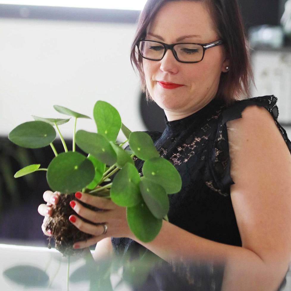 Sanna Rasku tykkää jakaa kilpipiilean emokasvista poikasia ja asettaa ne lasipulloihin koristeeksi.