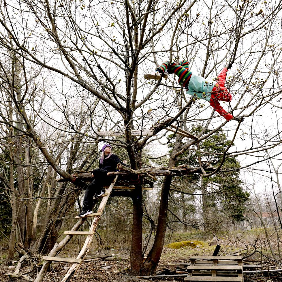 Lumi Markkanen ja Ilma Ormio ovat rakentaneet majansa korkealle puuhun Lauttasaaressa. Ormio kiipeilee.