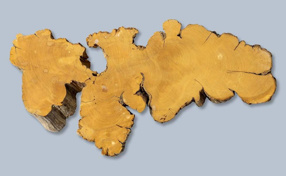 Heikki Kallion näytepala ikivanhasta katajasta paljastaa vuosirenkaat ja rungon epäsäännöllisen muodon. Renkaiden lukumäärää ei ole varmistettu. Rungon leveys on noin 32 cm.