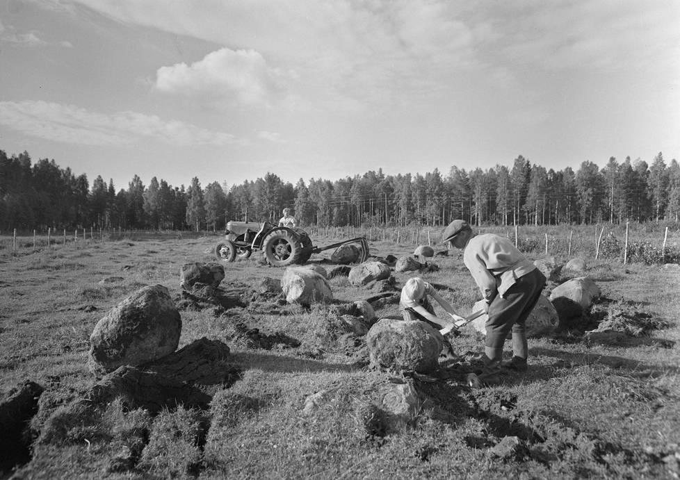 Kivisen pellon raivaus Joutsassa 20. kesäkuuta 1960.