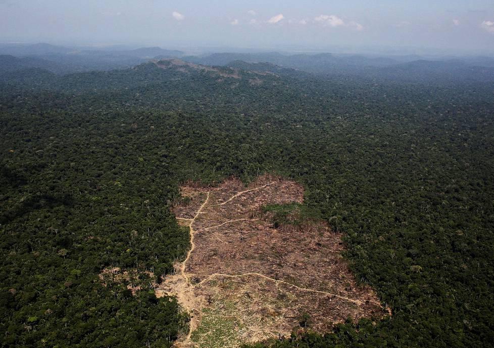 Maatalouden tarpeisiin hakattua metsää Novo Progresson kaupungin lähellä syyskuussa 2013.