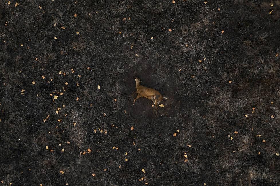 Maastopalossa kuollut peura. Ympäristöaiheiset sarjat, 1. palkinto.
