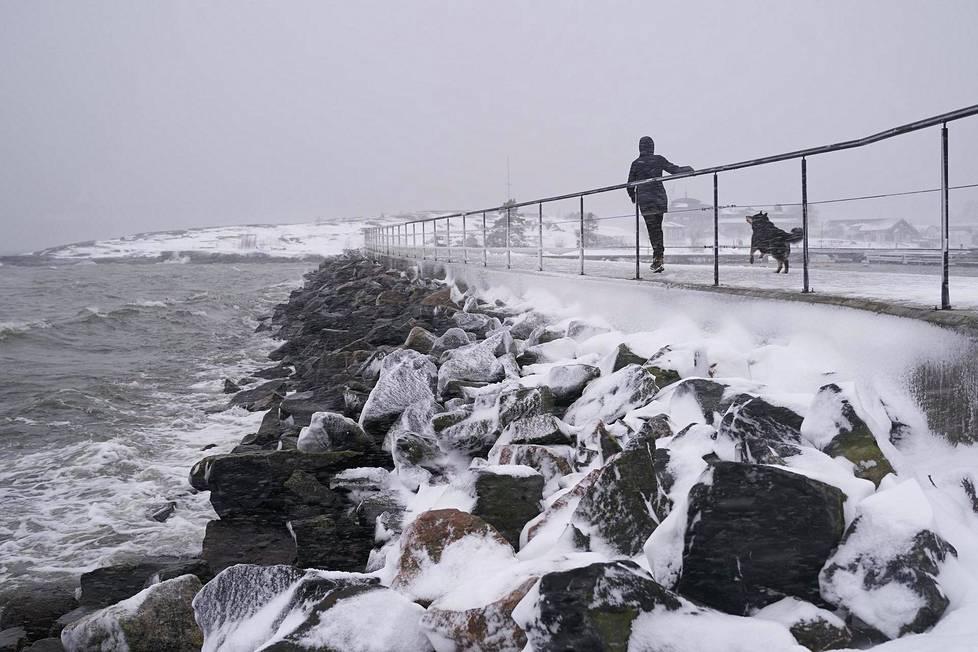 Kreetta Hanulla vakiolenkillään Helsingin Uunisaaressa 12. tammikuuta 2021. Lapinporokoira Jarre nauttii rajusta tuulesta ja piiskaavasta lumisateesta.