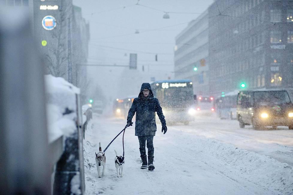 Koirien ulkoiluttaja ylitti siltaa Hakaniemestä Kaisaniemen suuntaan aamupäivällä.