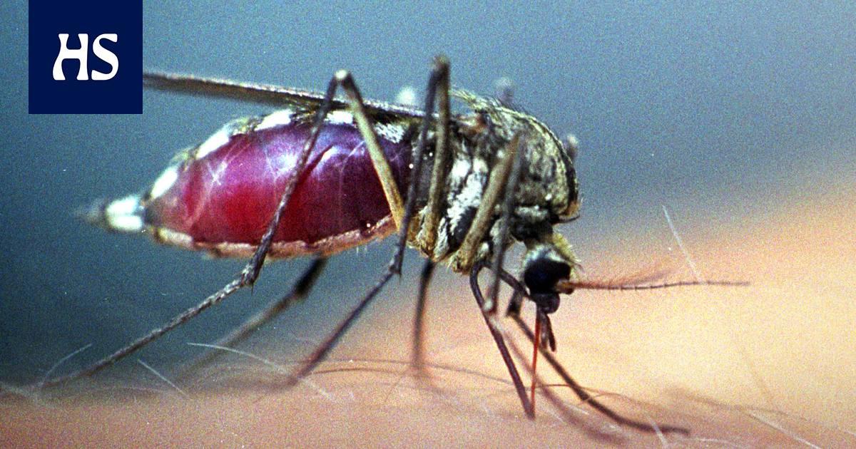 Verta Imevät Hyönteiset
