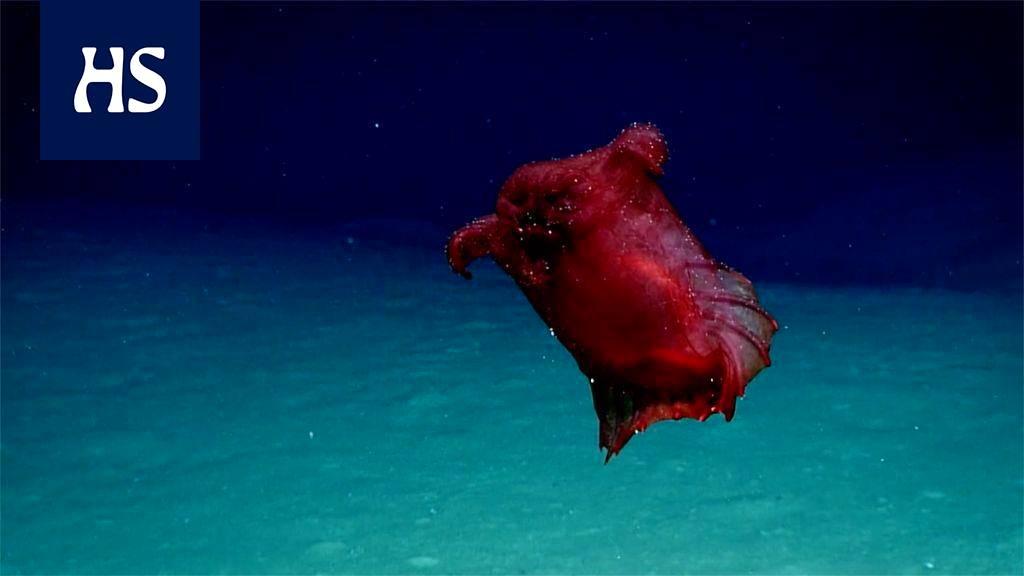 """Päätöntä kanaa muistuttava uiva """"merihirviö"""" löytyi kilometrien syvyydestä Etelämantereella"""