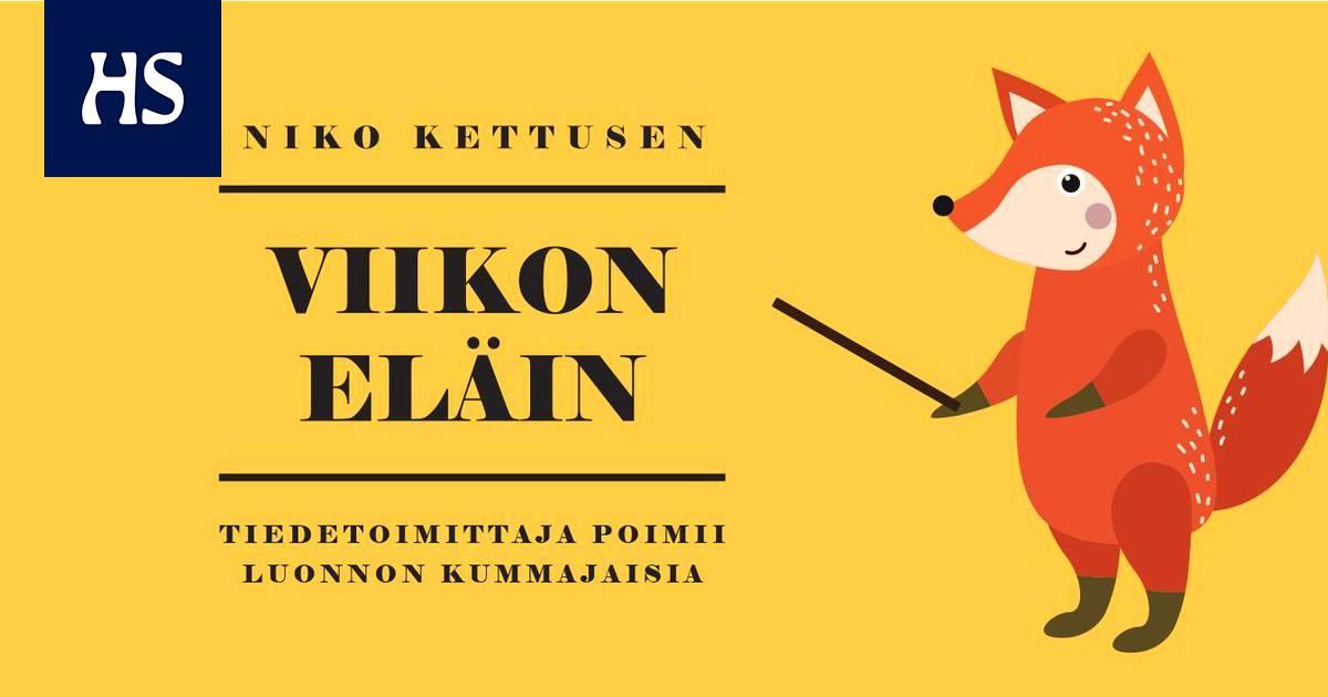 Puunhalausviikolla voi harrastaa kääpimistä – Suomessa on 251 kääpälajia, joista moni on jo uhanalainen