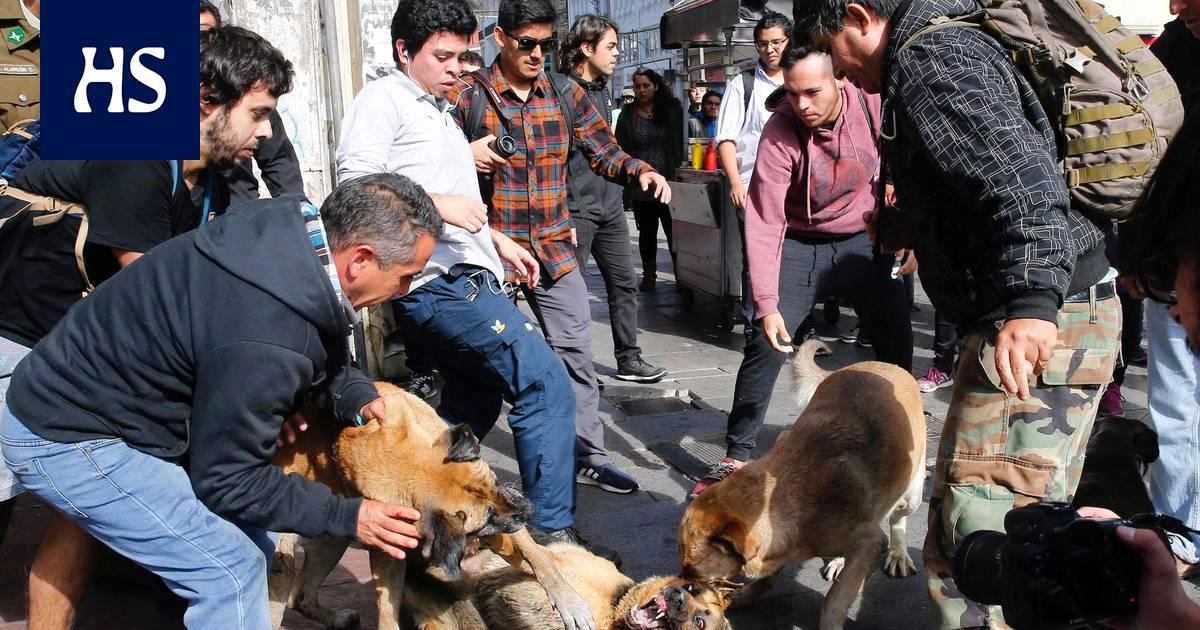 Maailman koirakanta saattaa olla jo ylittänyt miljardin haamurajan, ja luonto kärsii siitä